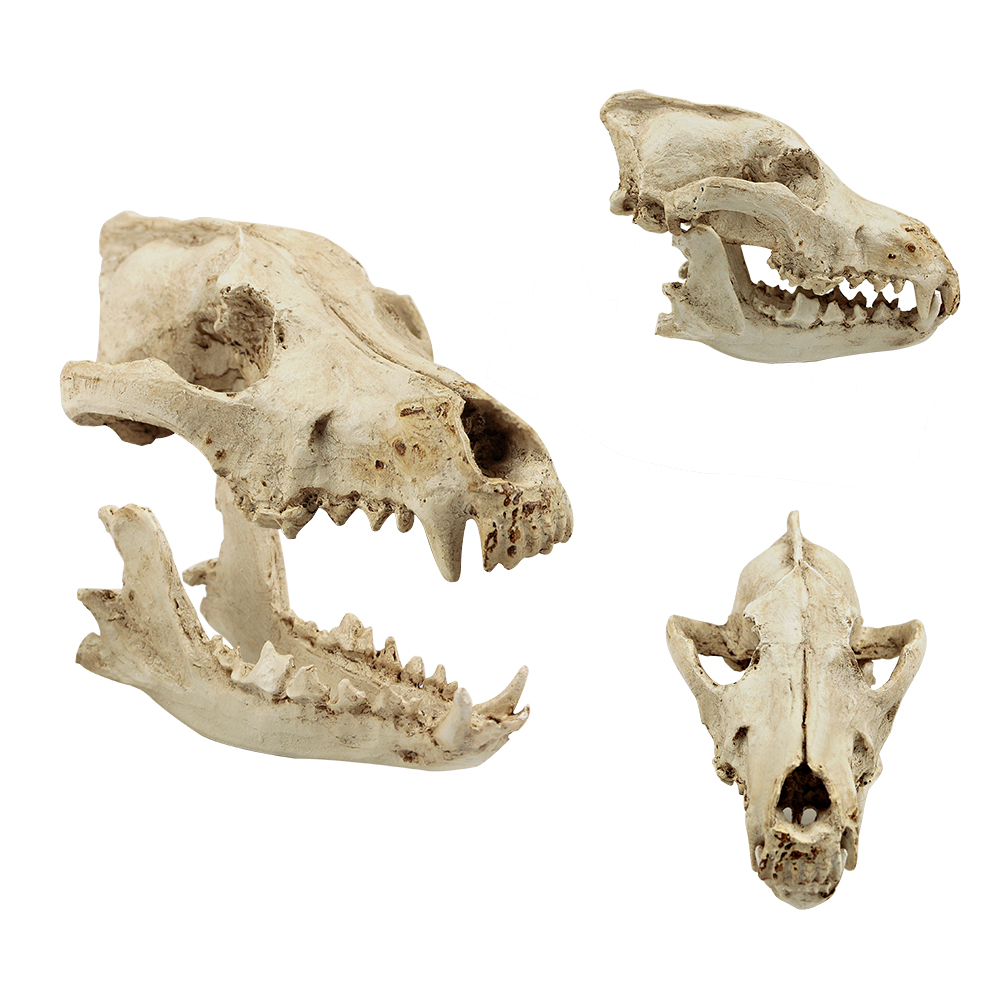 Uk Collection Handicrafts Home Decals Wolf Skull Model Decor Process